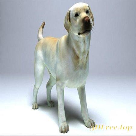 LABRADOR DOG LOW-POLY 3D MODEL (3DMax)