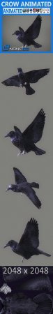 ANIMATED CROW 3D MODEL (3DMax)