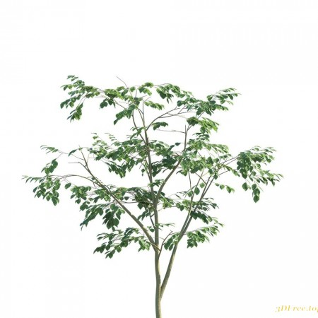 Polyget - Complete Foliage Collection - Beech Tree