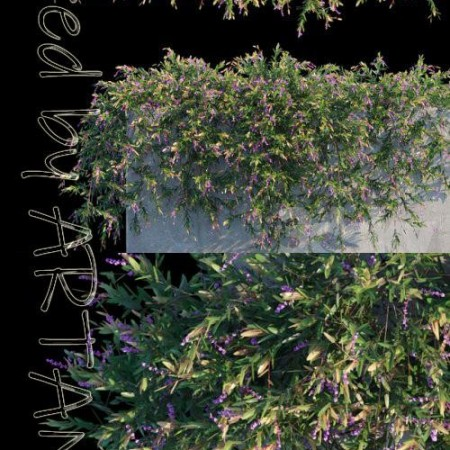 Purple Coral Pea Creeper 3D Model Template