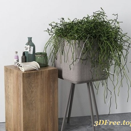 Plants Decorative Set 02