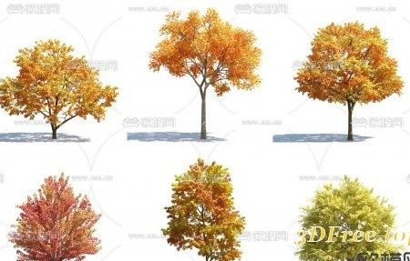 Autumn Trees Pack 01