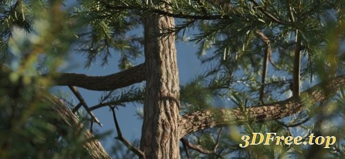 Vertex Trees - Scots Pines Bundle (MAX, C4D, Houdini, FBX)