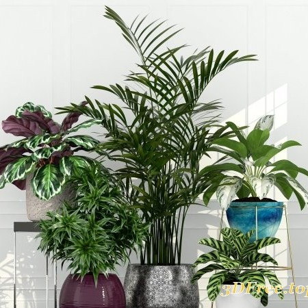 Plants Collection 155 3d models