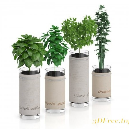 Cgtrader - Four Herbs in Glass Pots 3D model