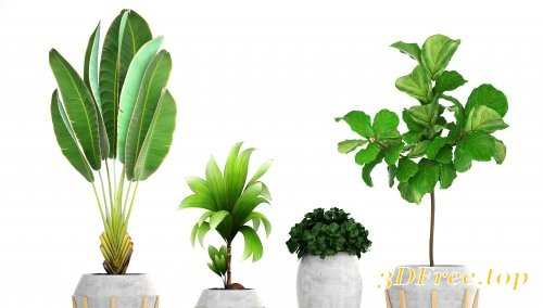 Collection of tropical plants 3D model