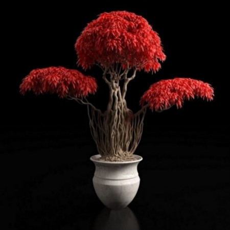 Red bonsai plants 3D model