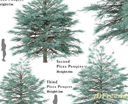 Cuberbrush - Set of Picea Pungens Trees (Blue spruce) (3 Trees)
