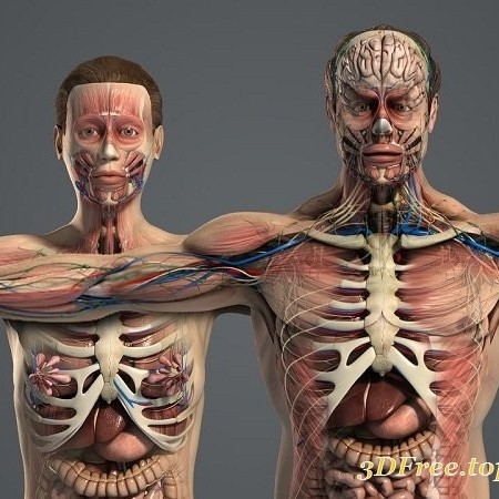 Male and Female Anatomy Complete Pack v5