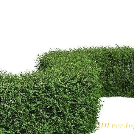 Cgtrader - Cotoneaster Hedge with Flowers 3D model
