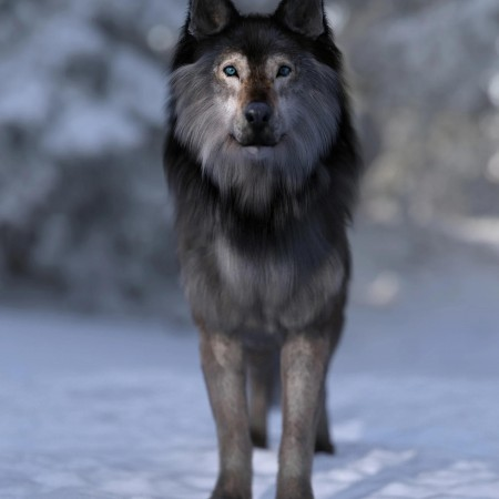 Dire Wolf for Daz Dog 8